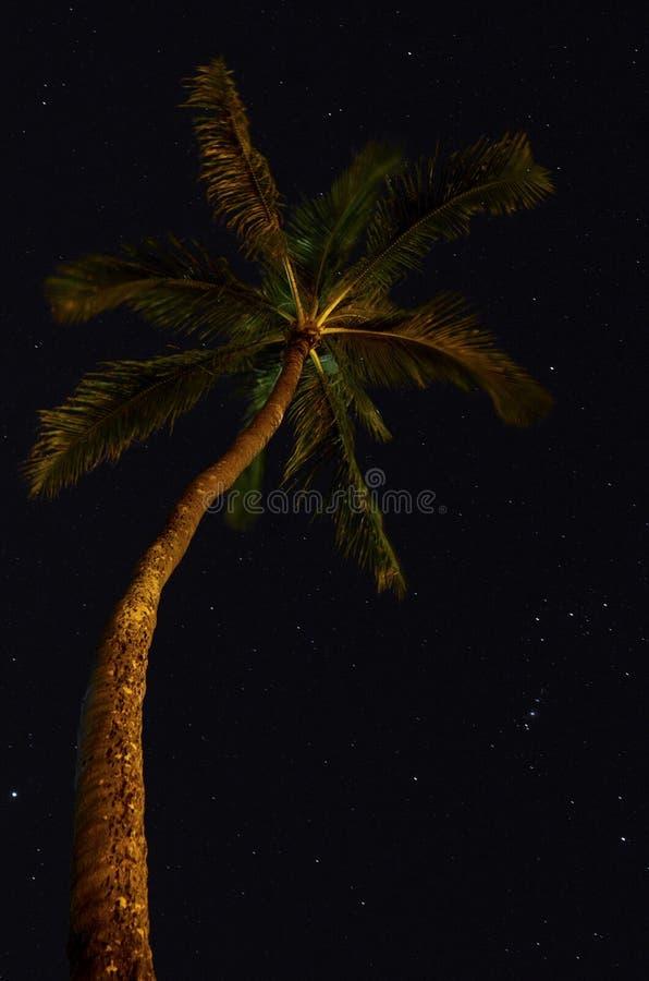 Palmen nachts lizenzfreie stockbilder