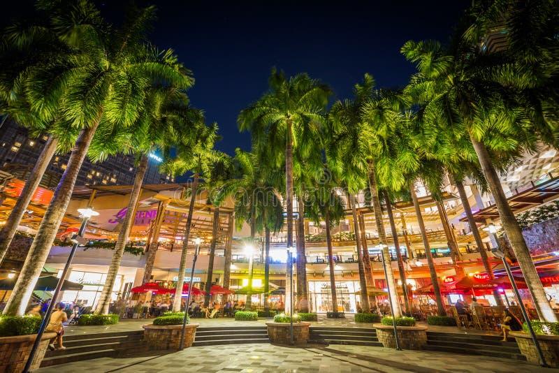 Palmen nachts, am Grüngürtel-Park, in Makati, Metro Manila, stockfoto