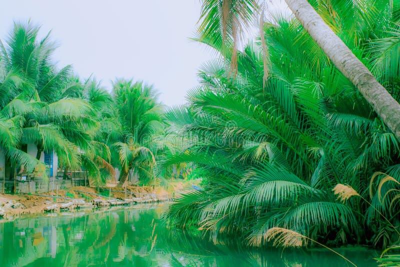Palmen nahe dem Fluss lizenzfreie stockfotos