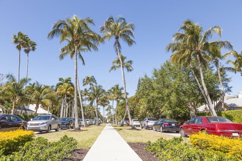 Palmen in Neapel, Florida lizenzfreie stockfotos