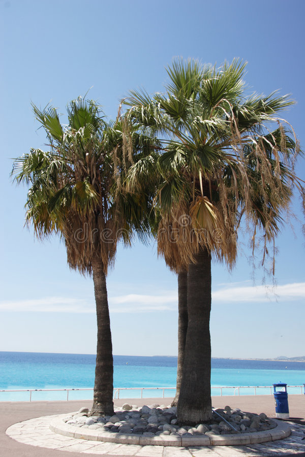 Palmen in Nice royalty-vrije stock foto