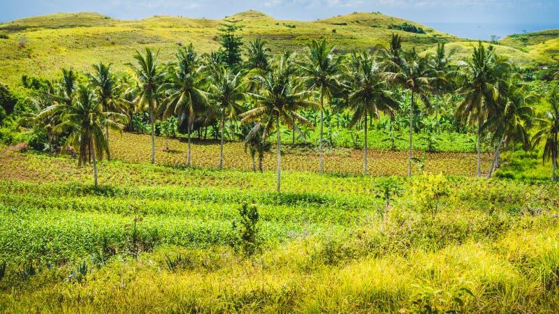 Palmen-Oase in Hügel Wisata Bukit Teletubbies, Insel Nusa Penida, Bali, Indonesien lizenzfreies stockfoto