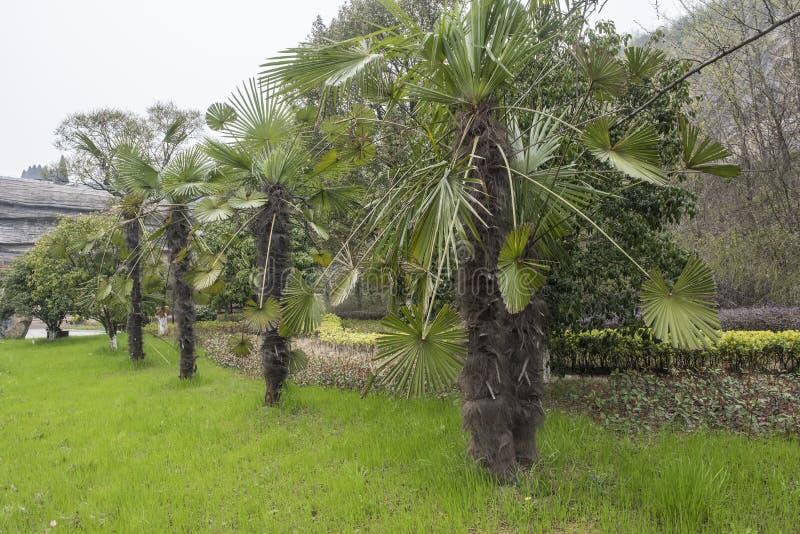 Palmen onder de klippen in het Nationale Geologische Park van Changxing, Zhejiang royalty-vrije stock afbeeldingen