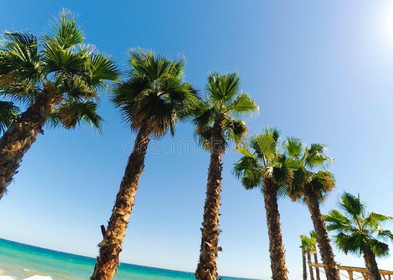 Palmen onder de zon royalty-vrije stock afbeeldingen