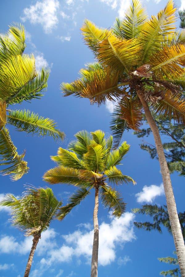 Palmen op blauwe hemel royalty-vrije stock afbeelding
