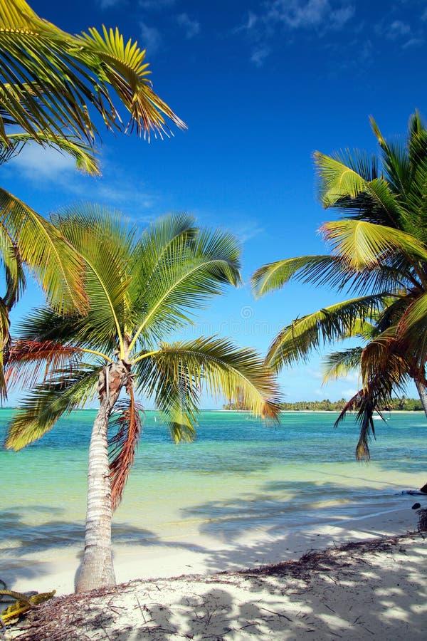 Palmen op Caraïbisch overzees strand royalty-vrije stock foto's