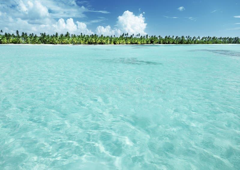 Palmen op Caraïbisch strand royalty-vrije stock foto
