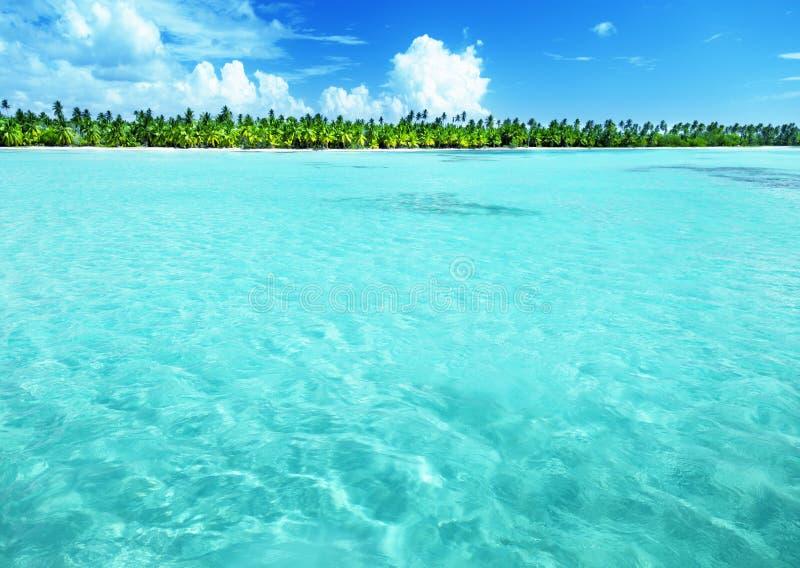Palmen op Caraïbisch strand royalty-vrije stock afbeeldingen