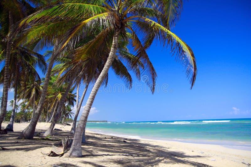 Palmen op Caraïbisch strand met wit zand stock foto's