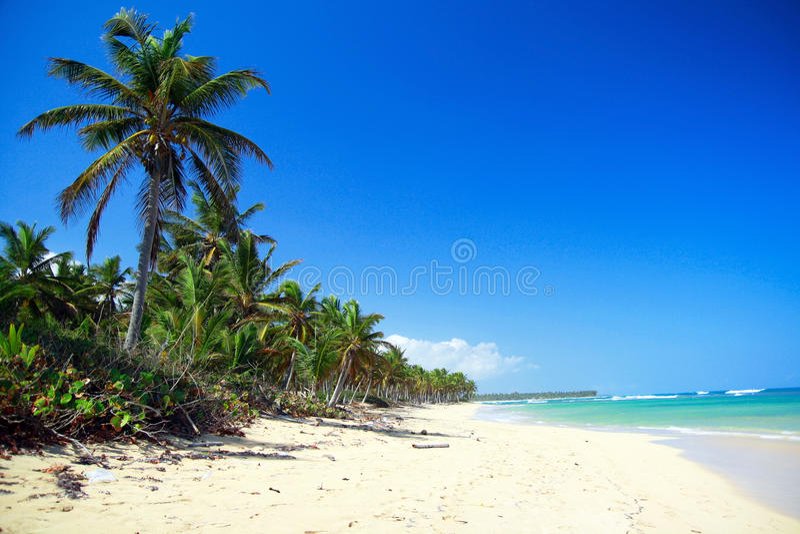Palmen op Caraïbisch strand, Punta Cana stock afbeeldingen