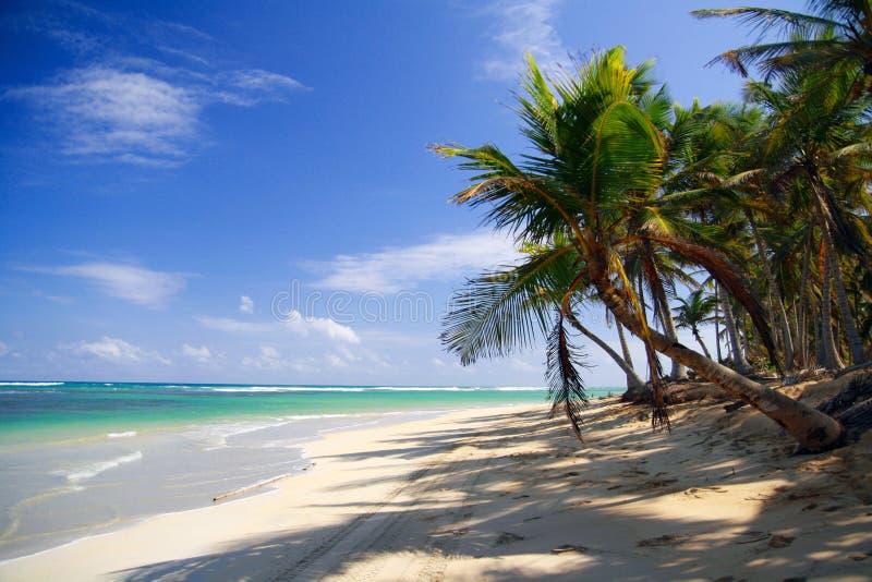 Palmen op Caraïbische overzees royalty-vrije stock foto