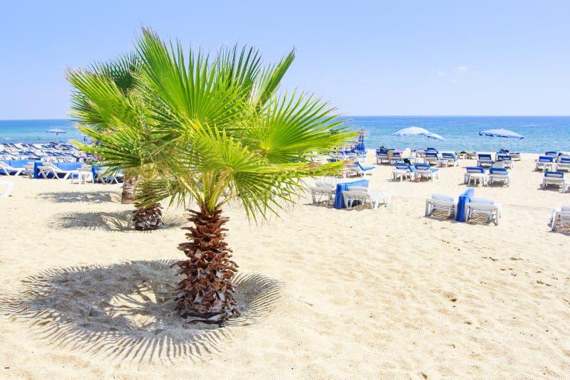 Palmen op de zomer overzees strand in Alanya op duidelijke zonnige de zomerdag Het witte zand ontspant toevluchtstrand in de rust royalty-vrije stock afbeeldingen