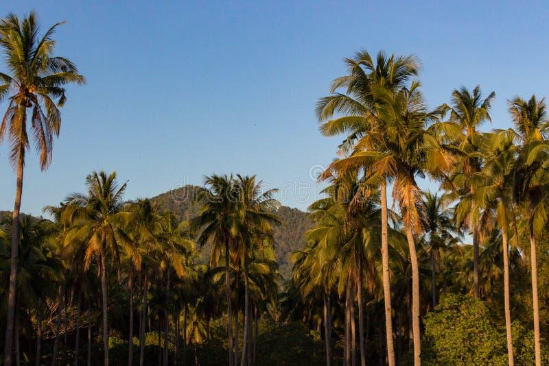 Palmen op duidelijke blauwe hemelachtergrond r Zonsonderganglicht op tropisch eiland stock foto