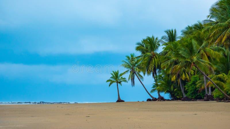 Palmen op een tropisch strand royalty-vrije stock foto
