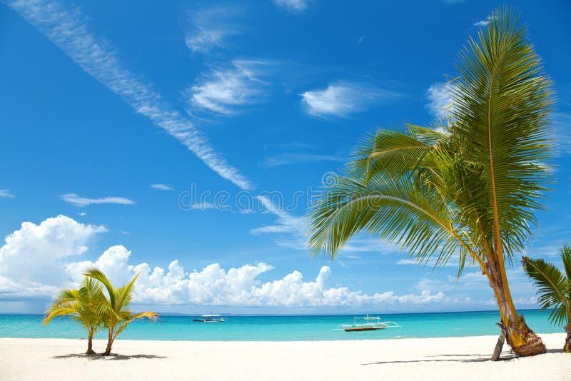 Palmen op een tropisch strand stock foto's