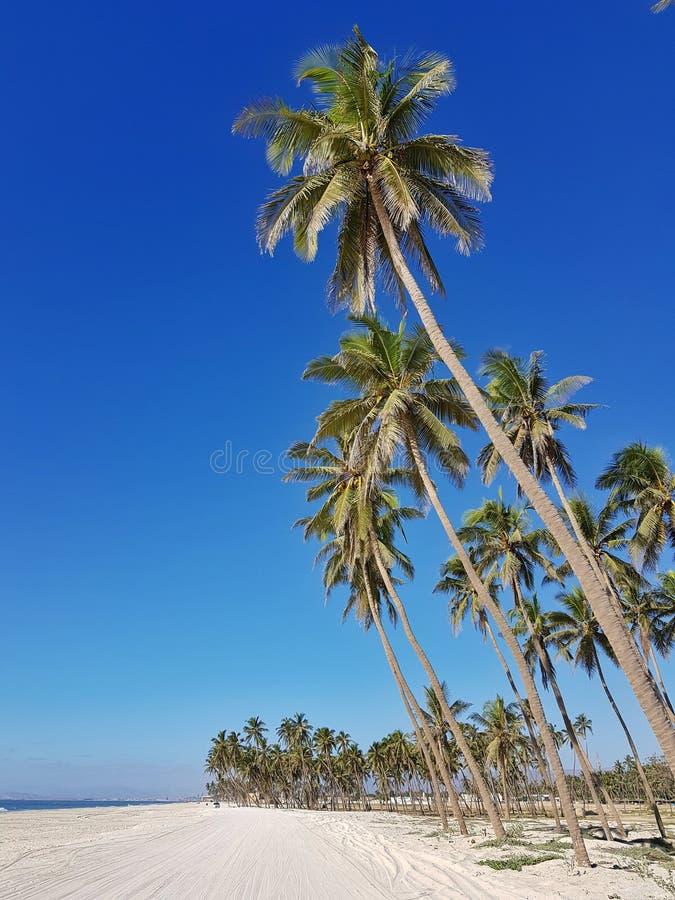 Palmen op het strand royalty-vrije stock afbeeldingen