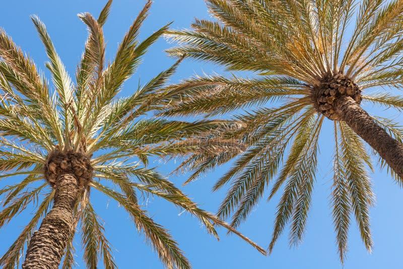 Palmen op het strand royalty-vrije stock afbeelding
