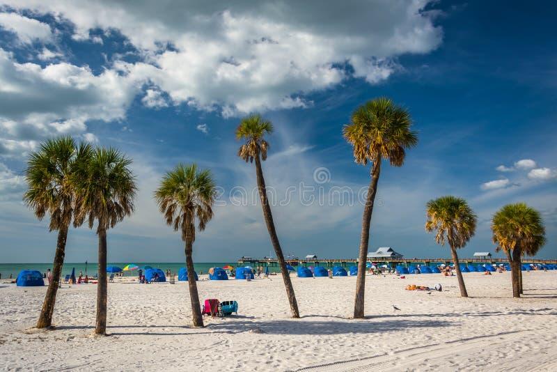 Palmen op het strand in Clearwater-Strand, Florida stock afbeeldingen