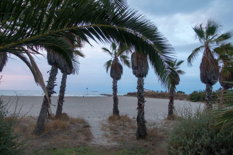 Palmen op het strand in een mooie zonsopgang stock afbeelding