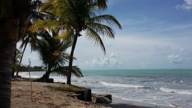 Palmen op het strand en een mooie overzees stock afbeelding