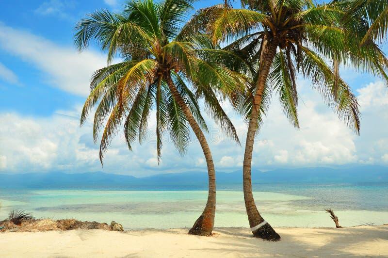 Palmen op het strand in het Caraïbische overzees stock fotografie