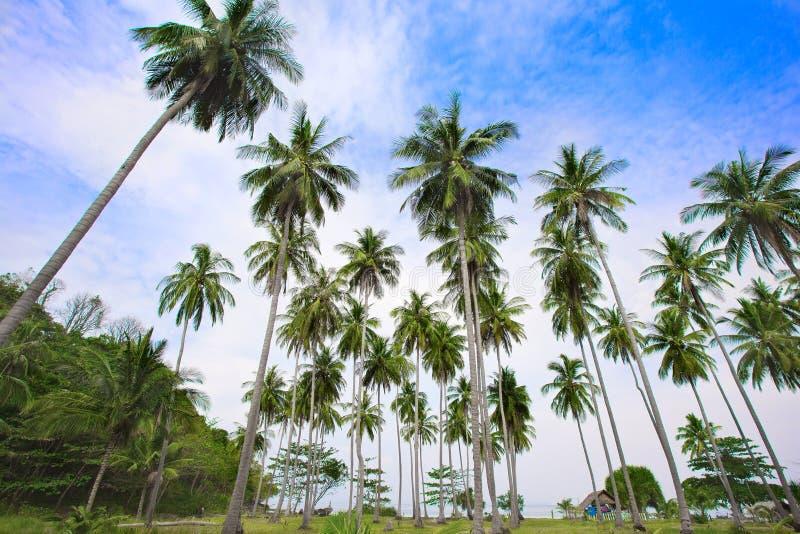 Bungalow op het strand onder palmen stock foto's