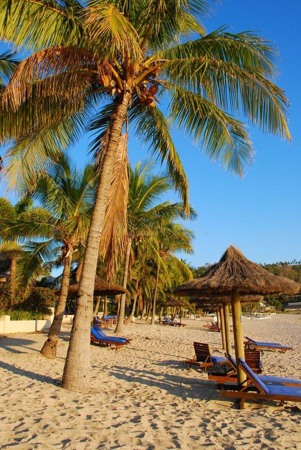 Palmen op luxe exotisch strand stock afbeeldingen