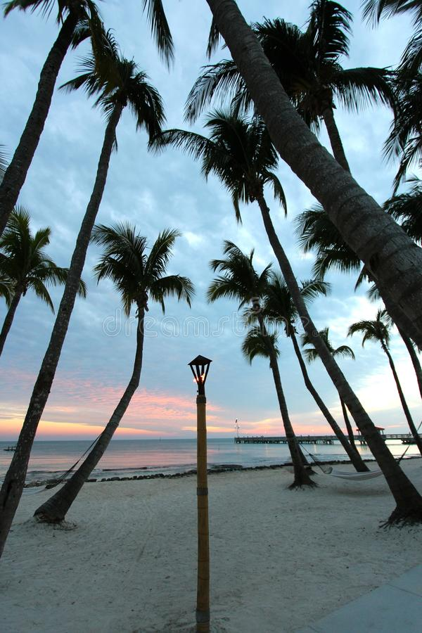 Palmen op strand bij zonsondergang stock foto's