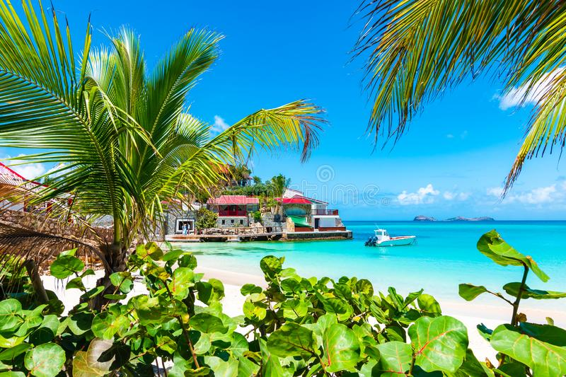Palmen op tropisch strand, St Barths, Caraïbisch Eiland stock foto