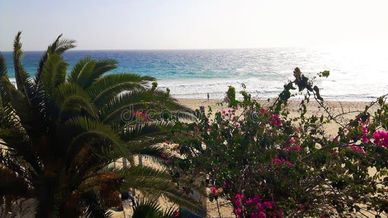 Palmen op vakantie in Fuerteventura in de winter stock afbeeldingen