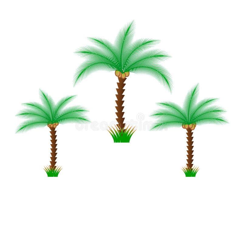Palmen op witte achtergrond worden ge?soleerd die Mooie de boom vastgestelde vectorillustratie van vectropalma stock illustratie