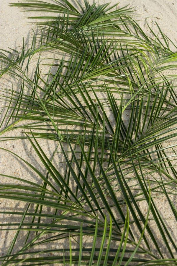 Palmen op zand stock foto's