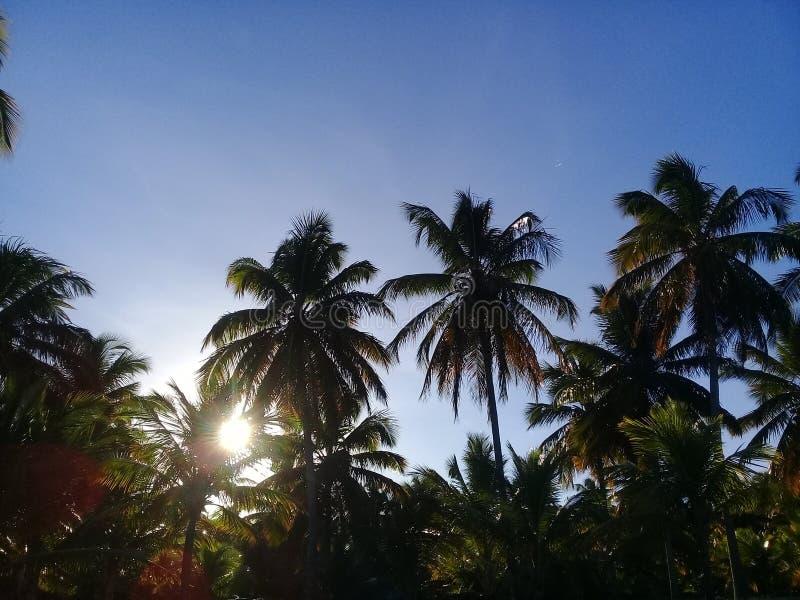 Palmen op zonsondergang met blauwe hemel royalty-vrije stock afbeelding