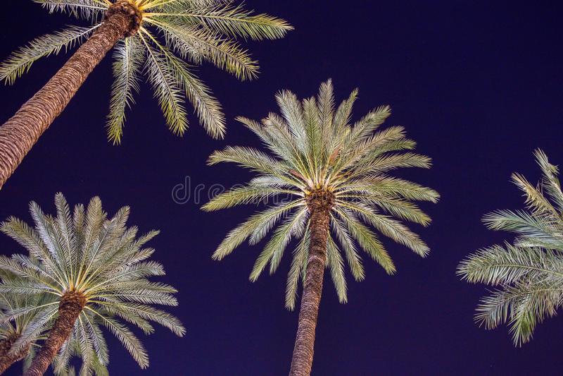 Palmen in Palermo royalty-vrije stock foto