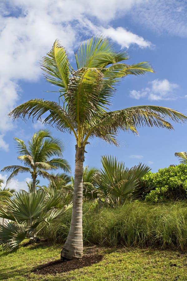 Palmen in paradijs stock foto's