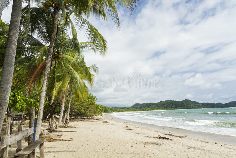 Palmen Playa Garza stockbilder