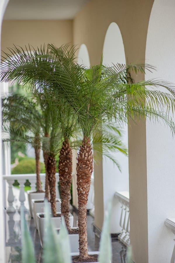 Palmen in pottenbinnenland royalty-vrije stock afbeeldingen