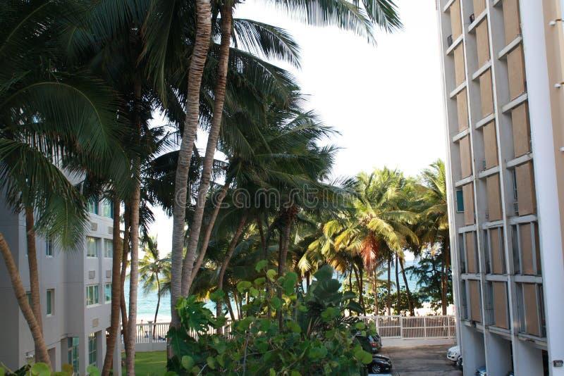 PALMEN IN PUERTO RICO royalty-vrije stock foto