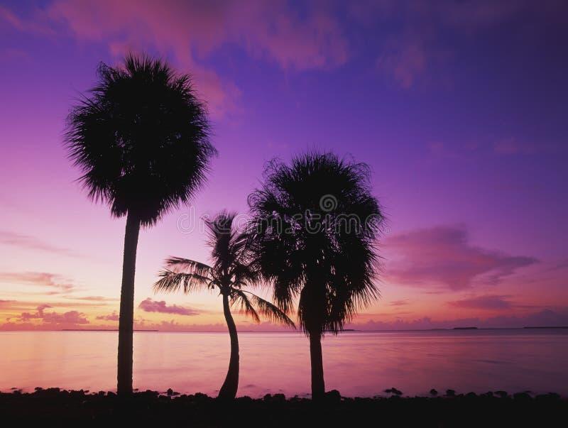Palmen am Sonnenaufgang lizenzfreie stockfotografie