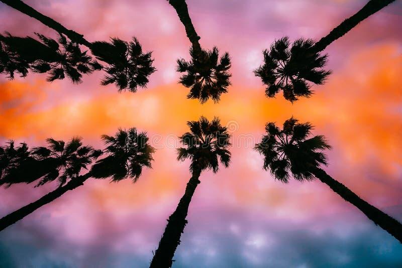 Palmen am Sonnenuntergang stockfotos
