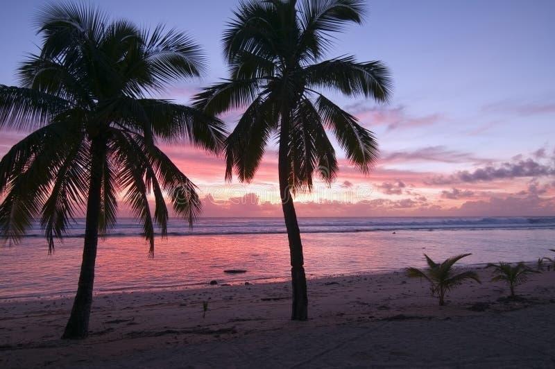 Palmen am Sonnenuntergang auf einem tropischen Strand lizenzfreies stockbild