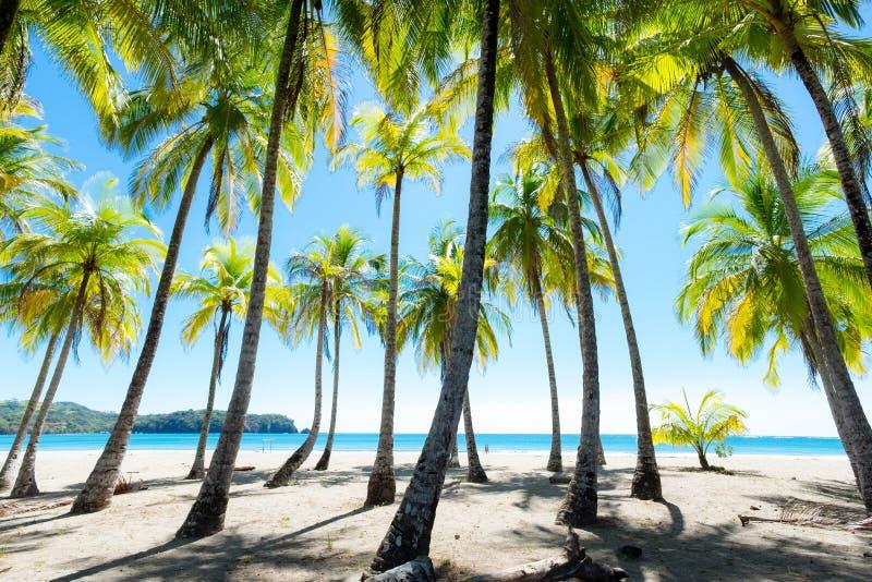Palmen am Strand stockfoto