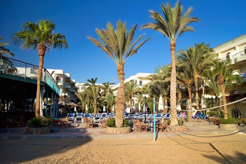 Palmen Sunbeds und als Teil des Strandes stockfotografie