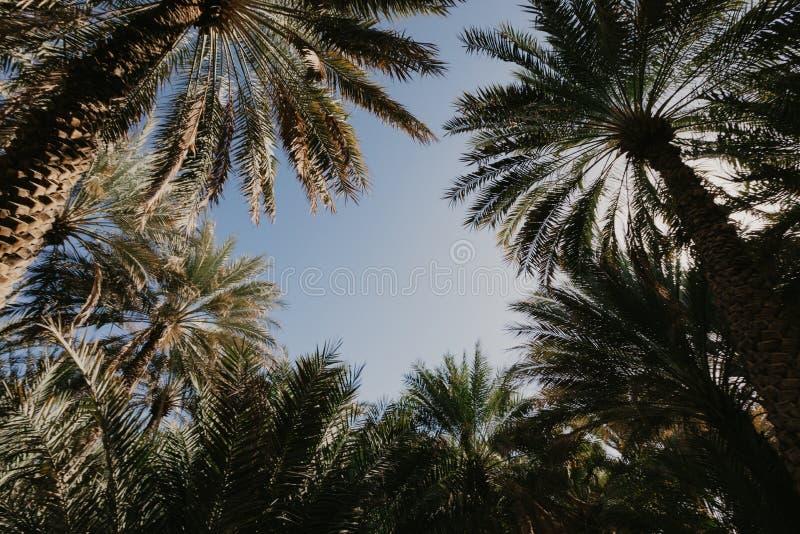 Palmen tegen blauw hemelbeeld stock afbeelding