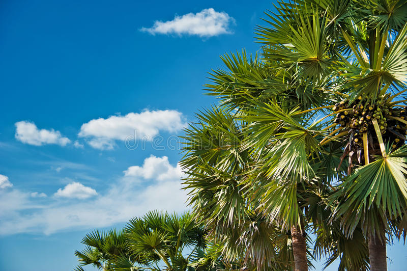 Palmen tegen blauwe hemel royalty-vrije stock afbeeldingen