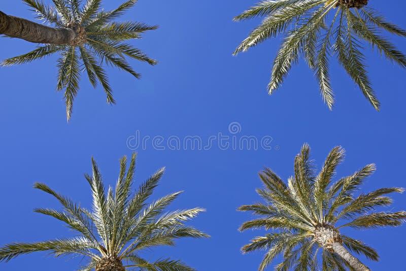 Palmen tegen blauwe hemel royalty-vrije stock afbeelding
