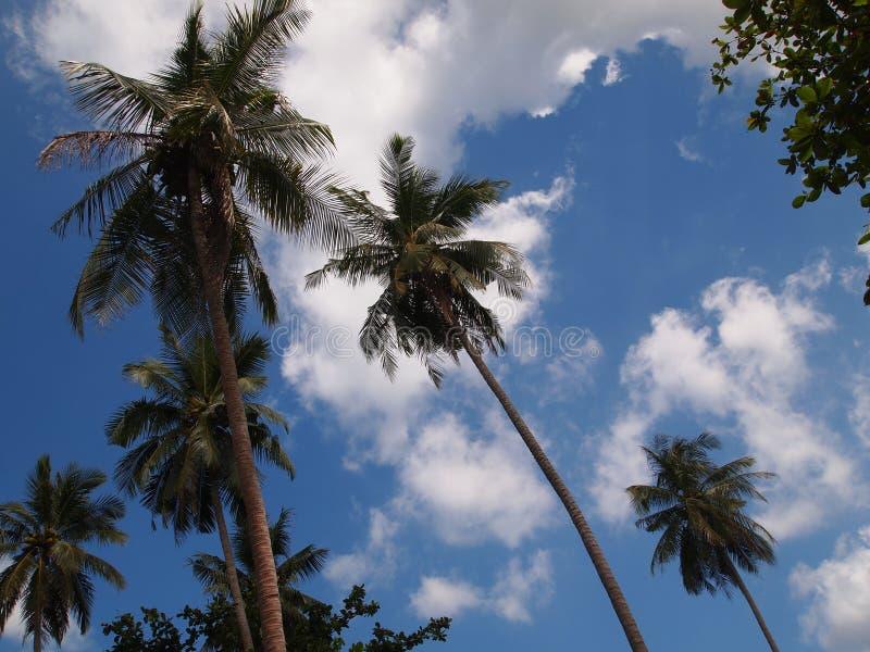 Palmen tegen de blauwe hemel stock afbeeldingen