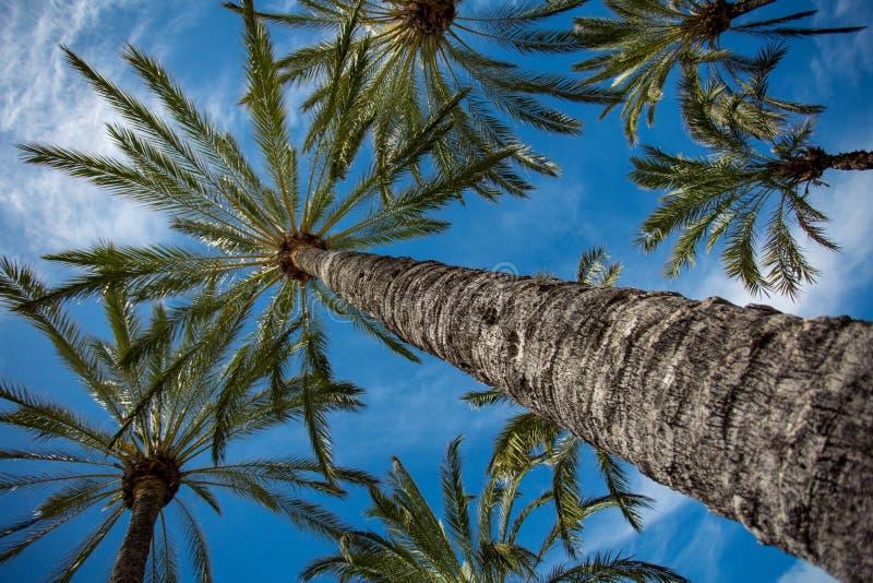 Palmen tegen de blauwe hemel royalty-vrije stock foto