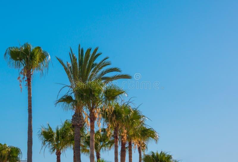 Palmen tegen de blauwe hemel Natuurlijke achtergrond De ruimte van het exemplaar stock foto's