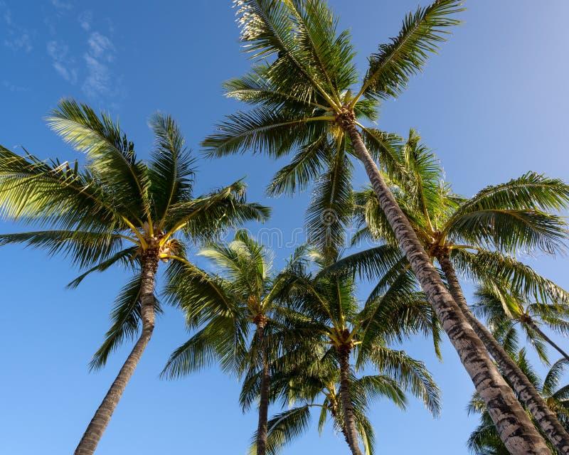 Palmen tegen een blauwe hemel in Hawaï royalty-vrije stock foto's